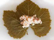 feuilles-de-vigne-5